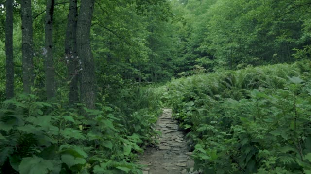 wander through the foggy green forest - spirituality stock videos & royalty-free footage