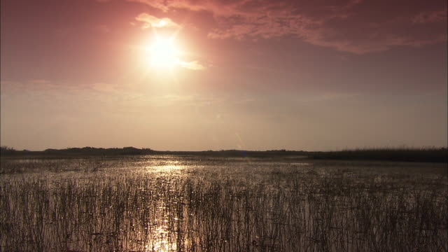 a waning sun glows above a marsh in the florida everglades. - everglades national park stock videos & royalty-free footage