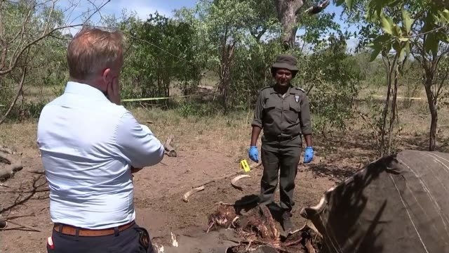 war with rhino poachers being lost various of reporter and national park staff along through the park park rangers taping off area around bodies of... - animal body part点の映像素材/bロール