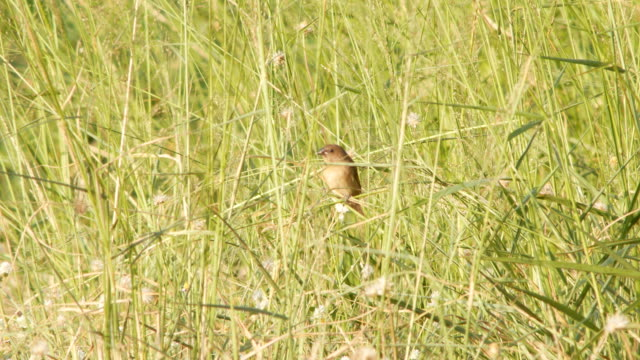 warbler bird - warbler stock videos & royalty-free footage