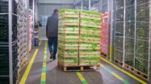 vídeos y material grabado en eventos de stock de empleado de ds warehouse usando un gato de palet para quitar cajas apiladas de lechuga fresca - cocina estructura de edificio