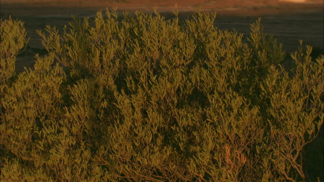 a warm breeze rustles trees near coober pedy. - coober pedy stock videos & royalty-free footage