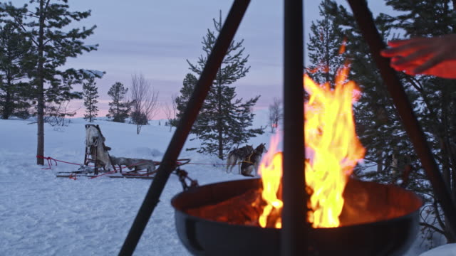 ds warming by the open fire in norway - sled dog stock videos & royalty-free footage
