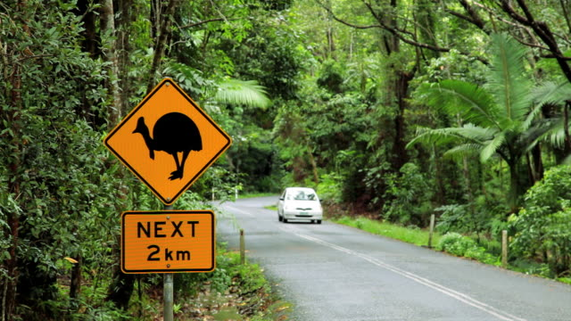 warning sign for the cassowary bird, daintree national park nr cairns, queensland, australia - road sign stock videos & royalty-free footage