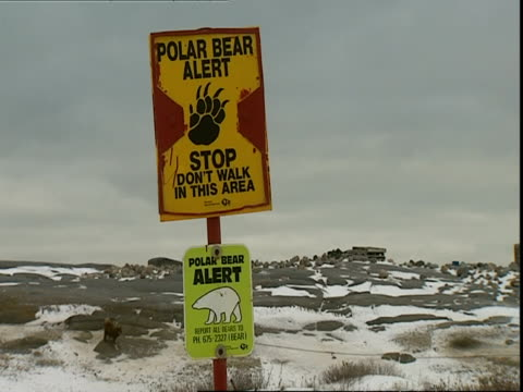 warning sign; polar bear (ursus marinus) alert, manitoba, canada - manitoba stock videos & royalty-free footage