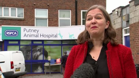 warns of animal hospital closures amid drop in donations; england: london: putney: ext gv woman holding dog wearing neck cone speaking to vet wearing... - animal neck stock videos & royalty-free footage