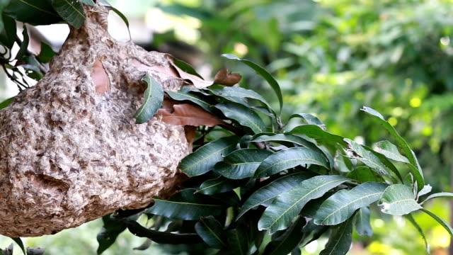 Warp's Nest