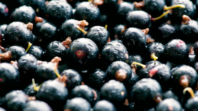 washed blackcurrant berries