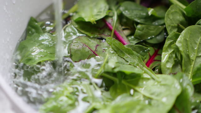 washes a colander of fresh salad leaves - spinach salad stock videos & royalty-free footage