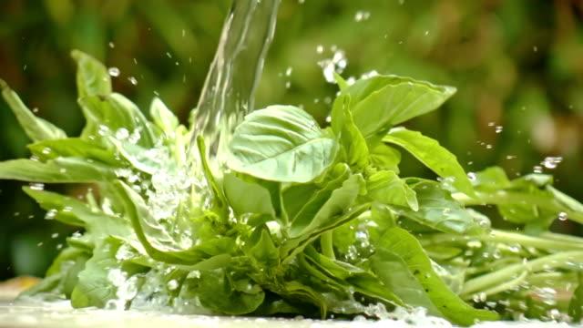 Washing Basil In Slow Motion