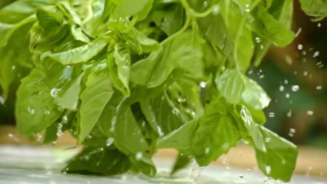 washing basil in slow motion - basil stock videos & royalty-free footage