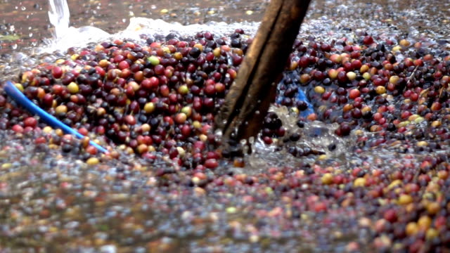 washing coffee bean slow motion - lava video stock e b–roll