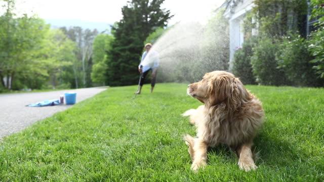 Washing Dogs