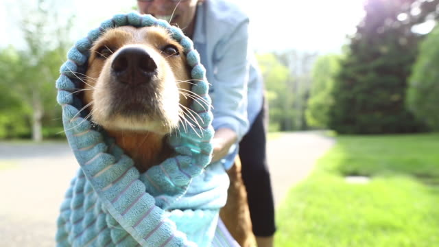 washing dogs - towel stock videos & royalty-free footage