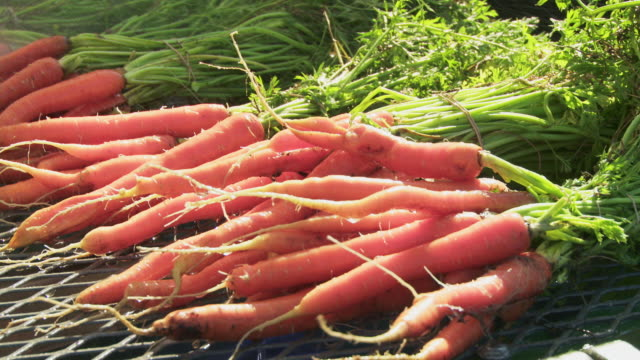 cu washing freshly harvested carrots - carrot stock-videos und b-roll-filmmaterial
