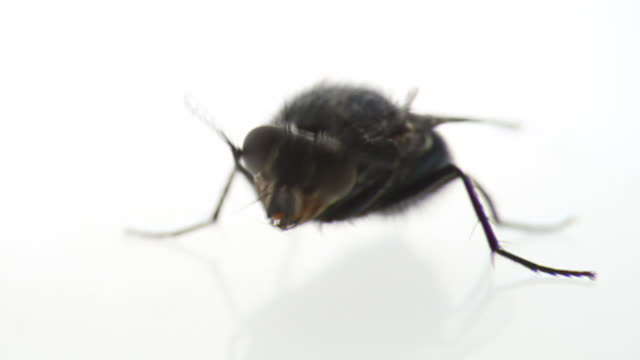 washing housefly - housefly stock videos & royalty-free footage