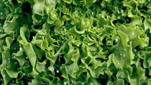 slo mo washing lettuce - salad stock videos & royalty-free footage