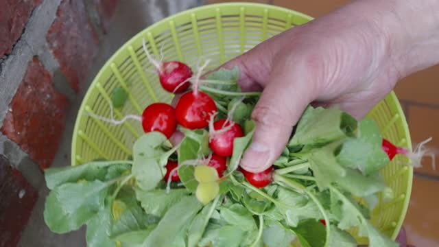 vídeos de stock e filmes b-roll de washing radishes - ramo parte de uma planta