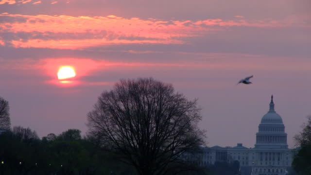 washington dc sunrise hd time lapse - smithsonian institution stock videos & royalty-free footage