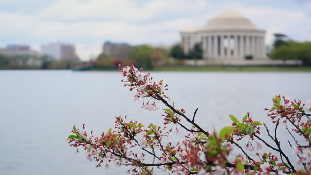washington dc - tidal basin and jefferson memorial - smithsonian institution stock videos & royalty-free footage
