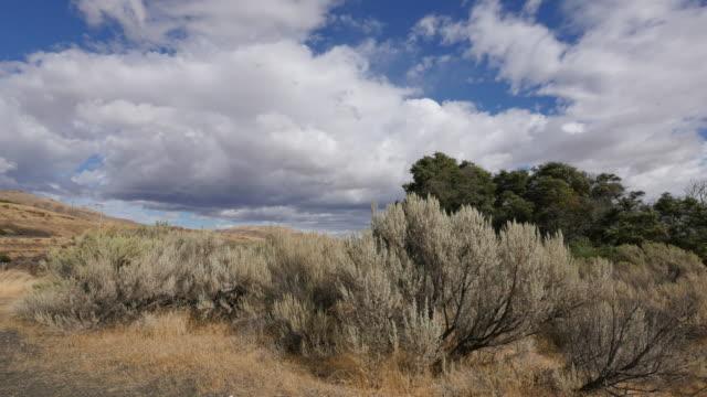 Washington large clouds over trees
