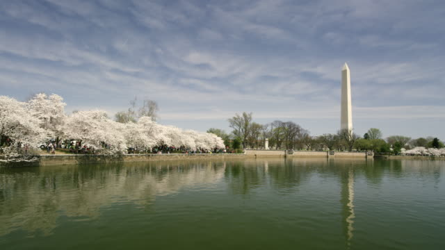 washington monument and tidal basin with cherry blossoms in time-lapse   - washington monument washington dc stock videos & royalty-free footage