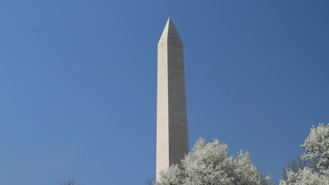 vidéos et rushes de slo mo ws pan washington monument with cherry blossom in foreground against blue sky / washington dc, usa - 2010