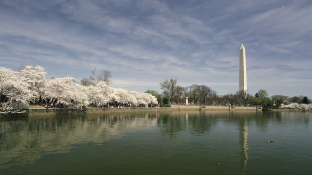 washington monument with cherry blossoms and tidal pool in slow motion.. - washington monument stock videos & royalty-free footage