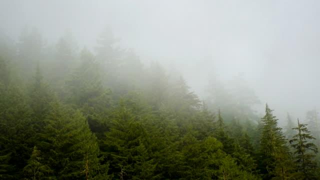 washington state, mt rainier park, landskap - mount rainier bildbanksvideor och videomaterial från bakom kulisserna