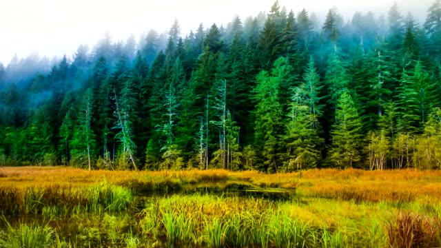washington state, mt rainier, park - mt rainier stock videos & royalty-free footage