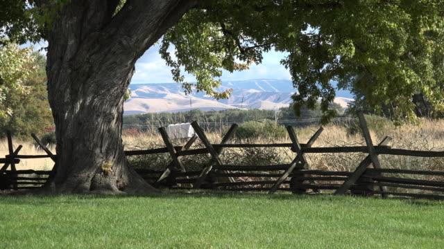 vídeos de stock e filmes b-roll de washington tree frames split rail fence and covered wagon - vedação