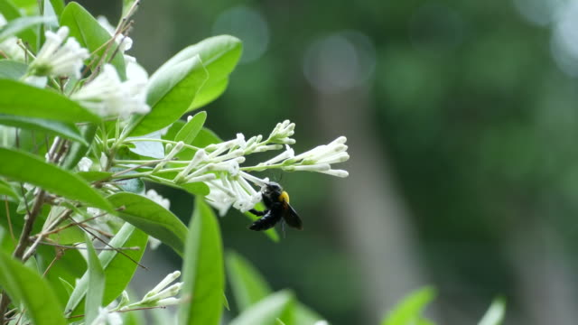 vídeos de stock, filmes e b-roll de absorver a vespa doce na flor branca - estampa de folha