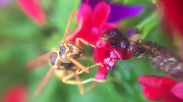 スズマチと花 - ブンブン鳴る点の映像素材/bロール