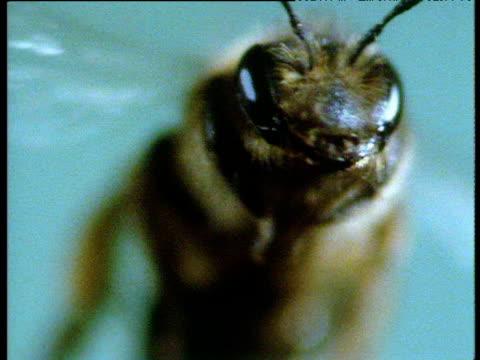 wasp flies head on against turquoise background - ブンブン鳴る点の映像素材/bロール