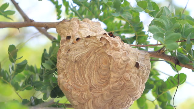 wasp hive - branch plant part stock videos and b-roll footage