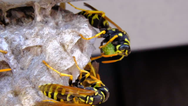 wasp nest macro - colony group of animals stock videos & royalty-free footage