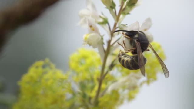 SLOW MOTION: Wasp