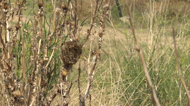 wespen hive in einer trockenen distel hinter dem bienenstock viele wespen vor sonne geschützt - epidemie stock-videos und b-roll-filmmaterial