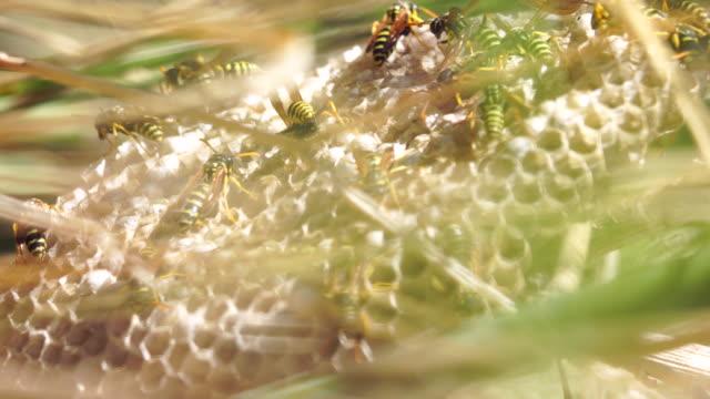 Getingar-registreringsdatafilen i gräset