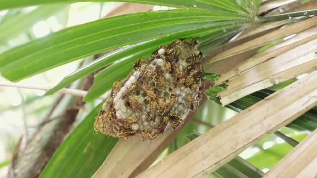 stockvideo's en b-roll-footage met wasp nest - recht eronder