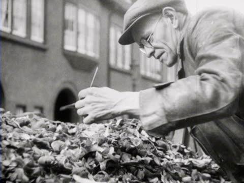 vídeos y material grabado en eventos de stock de 1942 b/w waste food collector collecting peelings to feed to pigs and cow / the hague, zuid-holland, netherlands - bieldo equipo agrícola