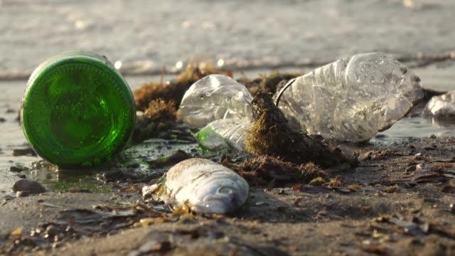 vidéos et rushes de déchets et poissons morts sur le rivage - aliments et boissons