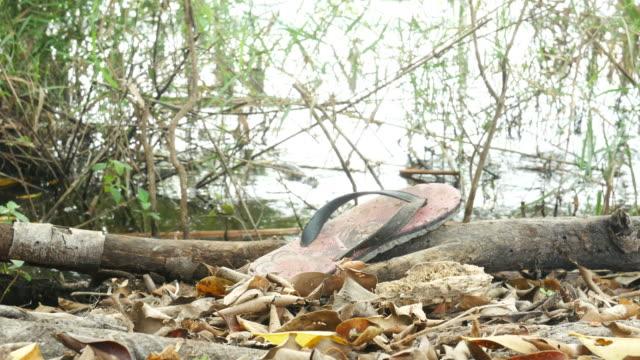 vídeos y material grabado en eventos de stock de contaminación por residuos en los bosques - rodear