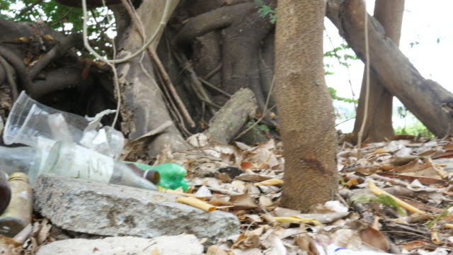 waste pollution in forest
