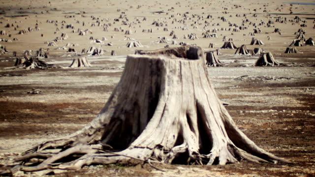 stockvideo's en b-roll-footage met wasteland (version two) - boomstronk