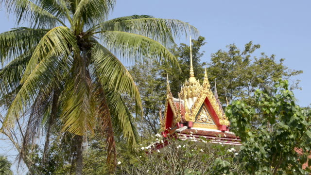wat na phra lan temple with palm trees - insel ko samui stock-videos und b-roll-filmmaterial