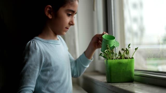 Kijk als een groeiende sprout