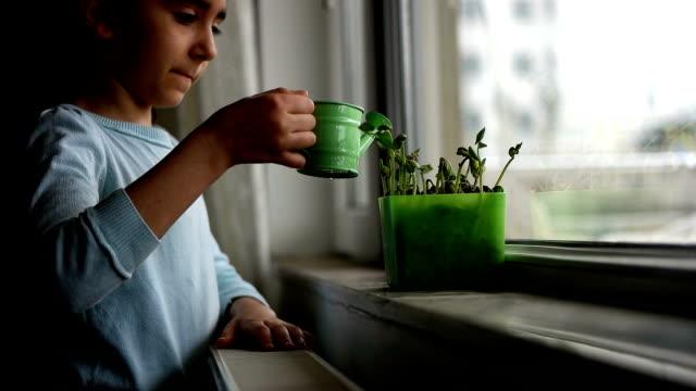 vídeos de stock e filmes b-roll de watch as a growing sprout - pequeno