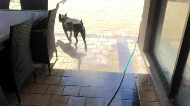 watch as sasha, a 12 yr old staffy cross kelpie, goes head to head with a pressure washer! itõs a lovely saturday afternoon in the middle of winter... - new age stock videos & royalty-free footage
