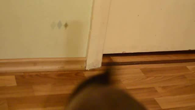 watch this cat go from zero to backflip in less than 10 seconds. the furry feline goes from sitting still and staring into space, until something... - less than 10 seconds stock-videos und b-roll-filmmaterial
